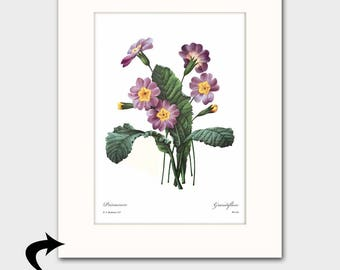 Primrose Art w/Mat (Purple Wall Decor, Bedroom Flower Art) Matted Pierre Redoute Botanical Print Illustrator