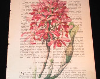 Pink orchid print on antique magazine page