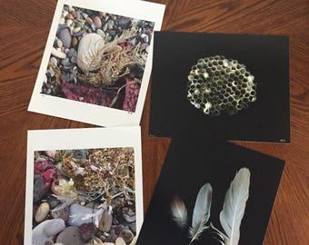 Natural Curiosities photographic print