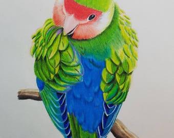 Lovebird drawing print
