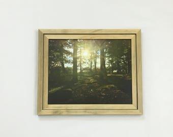 Forest Print Woods Wall Art Nature Photography Sunbeams Sunlight 8x10 Print 11x14 Print 16x20 Print Landscape Art Housewarming Gift