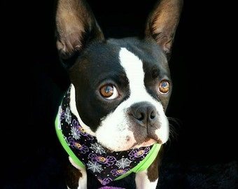 Halloween Dog Bandana Black with Purple Creepy Spiders || Frightful & Delightful Glow In The Dark || Puppy Gift || Three Spoiled Dogs