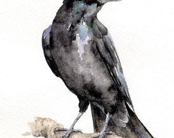 Crow - original watercolour painting