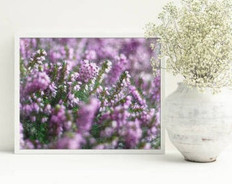 Purple wall art - printables - Digital photo -Nature stock photography, Instant download, Commercial, Heather picture, floral background