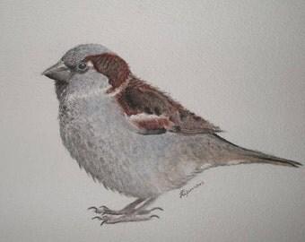Chubby House Sparrow
