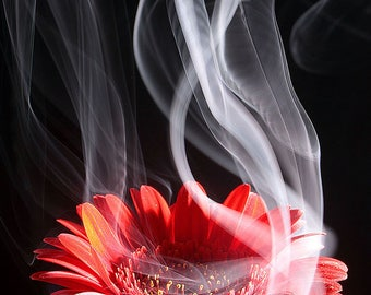 Smoking Flower Print Photograph