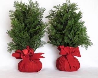 Red Bottom Twin Mini Christmas Trees