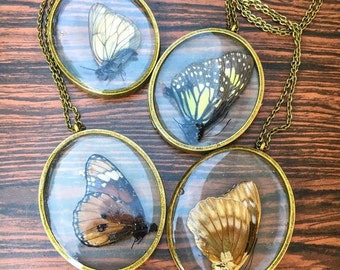 Preserved (naturally passed) Butterfly Large Oval Pendant Necklaces, your choice of necklace chain length!