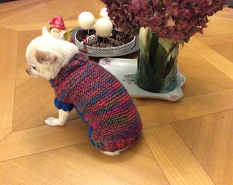 Sweater... coat... blue wool and multi color dog collar 1 kg 00 to 2kg 00