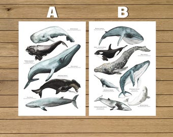 Whales Poster, Watercolor Illustration, Giclée Print, Wall Art Decor, A3 or A4 size