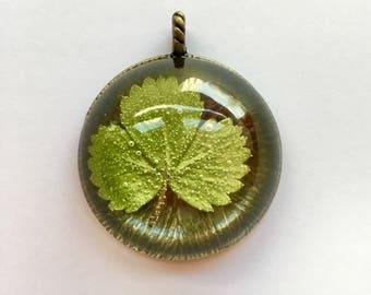 Médaillon avec inclusion de feuilles de fraisier