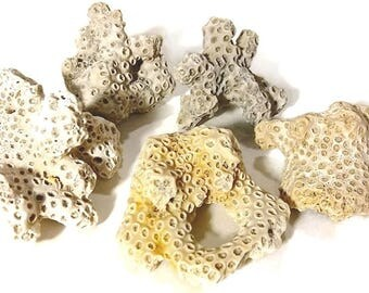 Medium Sea Coral Pieces-Hand Collected, beach coral, coral fragments, beach decor, beach crafts, sea fossils, white coral, fossil coral