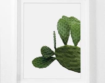 Framed Cactus Print, Modern Photography, Framed Botanical Photography, Minimalist Modern Art, Framed Desert Art, Mid Century Decor