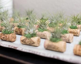 25 Wine Cork Air Plant Wedding Favor Magnets