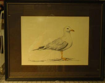 Watercolor painting of seagull by artist Jarvinen