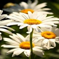 lavendergardencottag