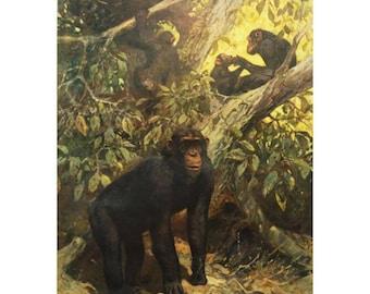 "Antique German School, Teaching Chart, Poster ""Chimp"""