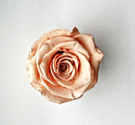 Preserved rose 6 pack, peach, rose, Everlasting rose, Forever rose, wedding rose, engagement rose, wholesale rose, sale rose