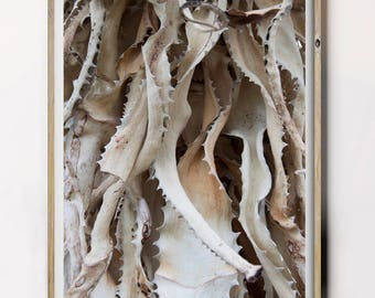 Desert Print, Desert Plant Photography, Nature Photography, Botanical Art Print, Exotic Plants