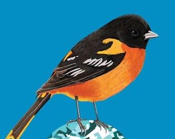 Baltimore Oriole Bird Print,  Oriole Poster, Baltimore Oriole Print, Baltimore Oriole Poster, Bird Illustration, Bird Art, Baltimore Oriole