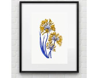 Botanical Illustration Wall Art