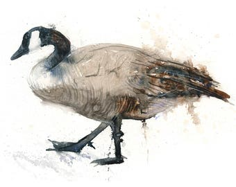 Fine Art Print of Original Canada Goose Watercolor Painting Signed A3 A4 Giclee High Quality Impressionist Wildlife Animal Water Fowl Bird