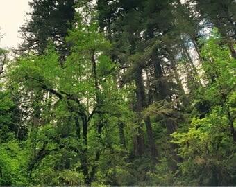 Oregon Wilderness Panoramic II