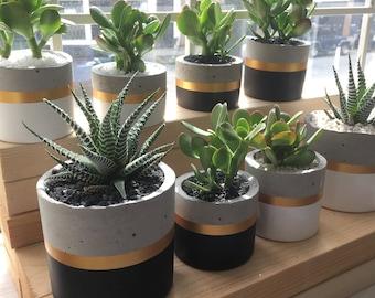 cylinder concrete planter round pot for succulents and cacti black u0026 gold