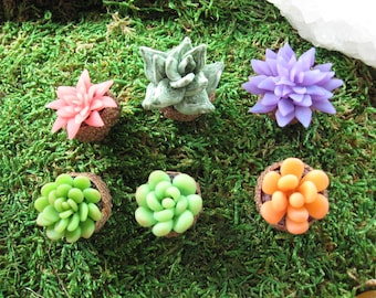 6 Pieces  Miniature Polymer Clay  Succulents in Varieties of Colors, Shape and Size  in Acorn Cap Planter
