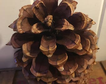 Coulter pine cones / giant pine cones / woodland decor / Large Pine Cone