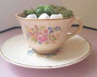 Teacup Planter Kit