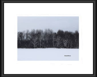 Stand out from the rest, Birch trees are so beautiful in the winter, Photography, Free Shipping, Wall Art, Home Decor, Print, Framed Print,