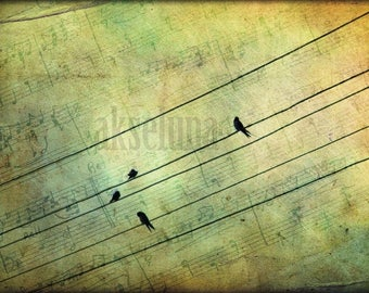 Fine art photography * The music notes * format 21x30 cm