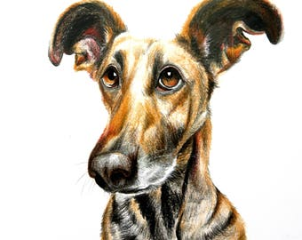Cute dog, drawing
