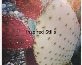 Prickly Pear Close-up Canvas