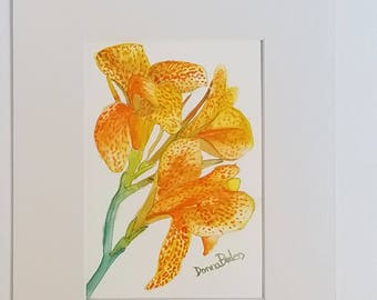 Spotted Canna Lily