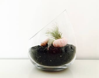 Air plant terrarium - terrarium kit - air plant - tillandsia-