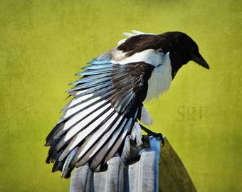The Gunslinger - PHOTO PRINT - Magpie