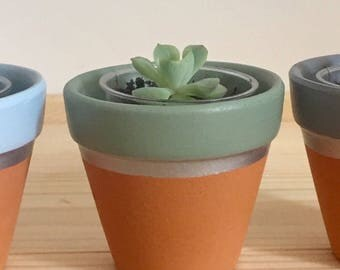 Mini terracotta plant pot - ideal for succulents and cacti