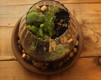 Lamp Shade Planter