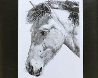 Horse Pencil Drawing Wall Art Print