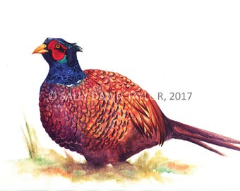 Shropshire Pheasant - Watercolour Painting A4 Print (Direct from Artist)