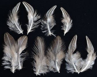 10 Sonnerat jungle cock Rooster feathers