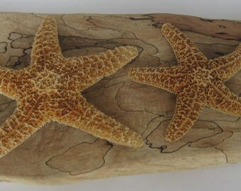 Star Fish Collection, 3 Star Fish, Pretty Star Fish