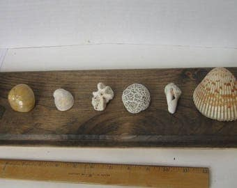 Set Of 9 Shells And Coral, Small Shells
