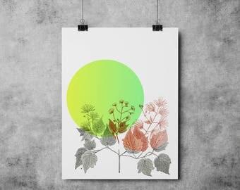 Botanic Illustration 003