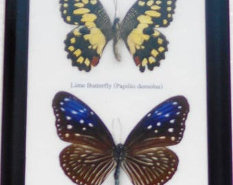 REAL 2 BEAUTIFUL Butterfly Collection In Fream