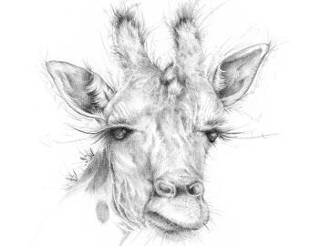 "Limited Edition Giclee Giraffe Art Print ""Ollie"""