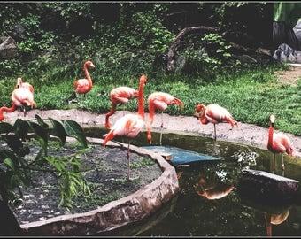 Fancy Flamingos (Photo)