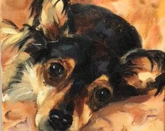 HeadShots pet portrait